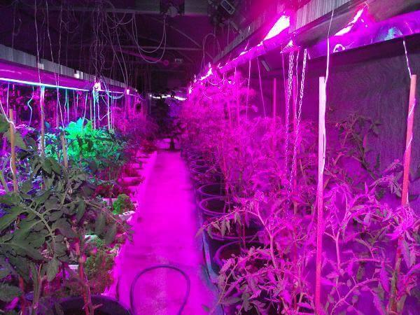 Подсветка растений светодиодами